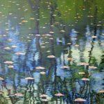 Mehran Zirak- peinture-reflet